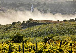 liliac-wijngaarden