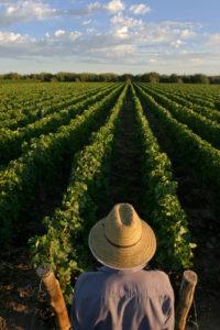 wijntrends-argentinie%cc%88